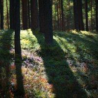 Краски леса :: Ульяна Федотова