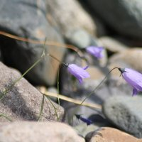 Камни и нежность. :: Ирина Королева