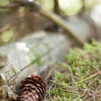 прогулка в лесу :: Милана DV