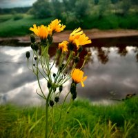 Цветок :: Marina Pelymskaya