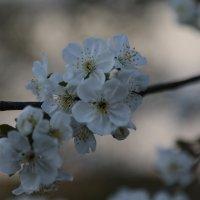 Цветочный хоровод-462. :: Руслан Грицунь