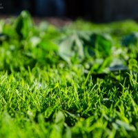 grass :: Андрей Прохоревич
