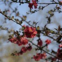 Цветочный хоровод-466. :: Руслан Грицунь