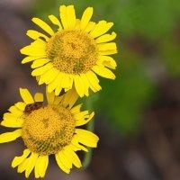 Какие-то желтенькие цветочки) :: Катя Шерабурко