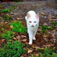Красивые глазки :: trutatiana .