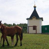 Пастораль в селе Сростки :: Виктор Буянов