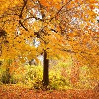 Осень в Ташкенте :: Евгений Стрелков