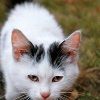 жил да был за углом белый кот)).... :: Елена Лабанова