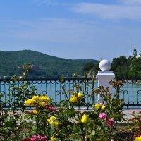 Розарий на берегу озера. :: cfysx