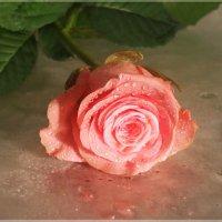 Оттенки розового... :: Эля Юрасова
