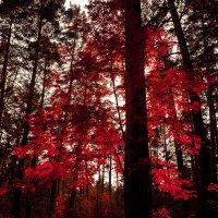 Осенний лес :: Алексей AvalonPR