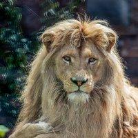 король ижевского зоопарка :: Леонид Ч