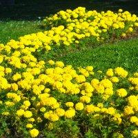 цветы :: Eugen Pracht