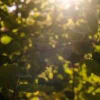 SunLight :: Андрей Прохоревич