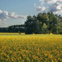 Виды на урожай :: Виктор Четошников