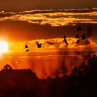 Улетают птицы в дальние края... :: Анатолий Клепешнёв