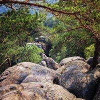 Путь к пещере.. :: Владимир Хижко