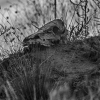 В лесу :: Илья Сигунов