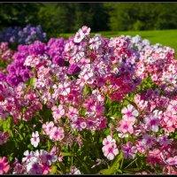 В ботаническом саду ... :: Jossif Braschinsky