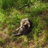 Кошка всегда найдет свет! :: Андрей Лукьянов