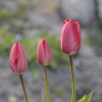 Цветочный хоровод-476. :: Руслан Грицунь