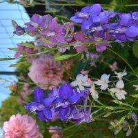 Разноцветие. :: zoja