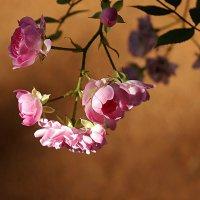 В летнем саду... :: Светлана marokkanka
