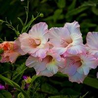 Время цветов :: Boris Khershberg