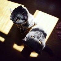 Такие подозрительные коты) :: Семен Кактус