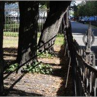 старая ограда и те же липы :: sv.kaschuk