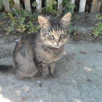 Cat :: Юлия Наимова