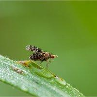 Про пятнистую муху... :: Андрей Ветров