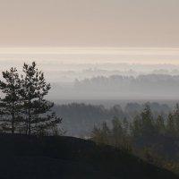 Туманное утро :: Илья Костин