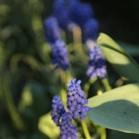 Цветочный хоровод-485. :: Руслан Грицунь