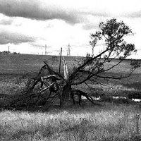 После бури :: Борис Александрович Яковлев