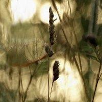 Трава - мурава. :: Владимир Гилясев