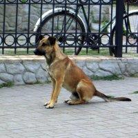 Бездомный пёс, из серии (Зарисовки привокзальной жизни)... :: Назар