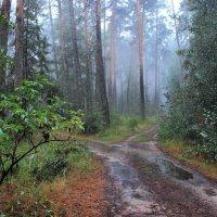 Богат был август на дожди... :: Лесо-Вед (Баранов)