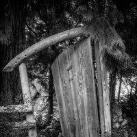 Добро пожаловать в лес индейцев shishalh :: Владимир Gorbunov