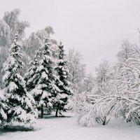 Зимний парк :: Николай Полыгалин