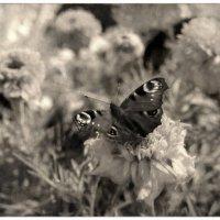 оставляющая цветок :: sv.kaschuk