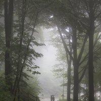 Туманный денек... :: АндрЭо ПапандрЭо