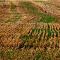 Полосатый  пейзаж.... :: Валерия  Полещикова