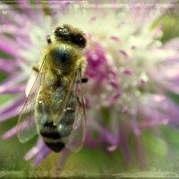 Пчелка :: Nina Streapan
