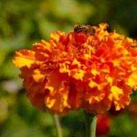 Прогулка по саду :: Роман Царев