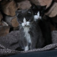 уютные котята :: Александра Сапоровская-Костюшко