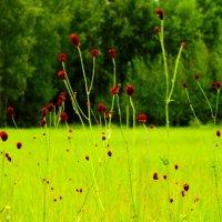 Краски уходящего  лета! :: Наташа Шамаева