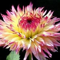 Цветочный костёр :: Alexander Andronik