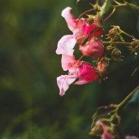И сорняки бывают красивые) :: Анна Кадулина-Новоселова