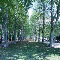 аллея в парке :: Ольга Богачёва